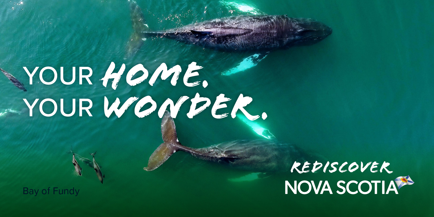 Two whales. Rediscover Nova Scotia.