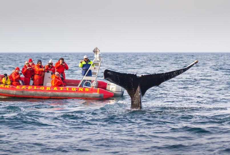 Whale Watching on the Bay of Fundy