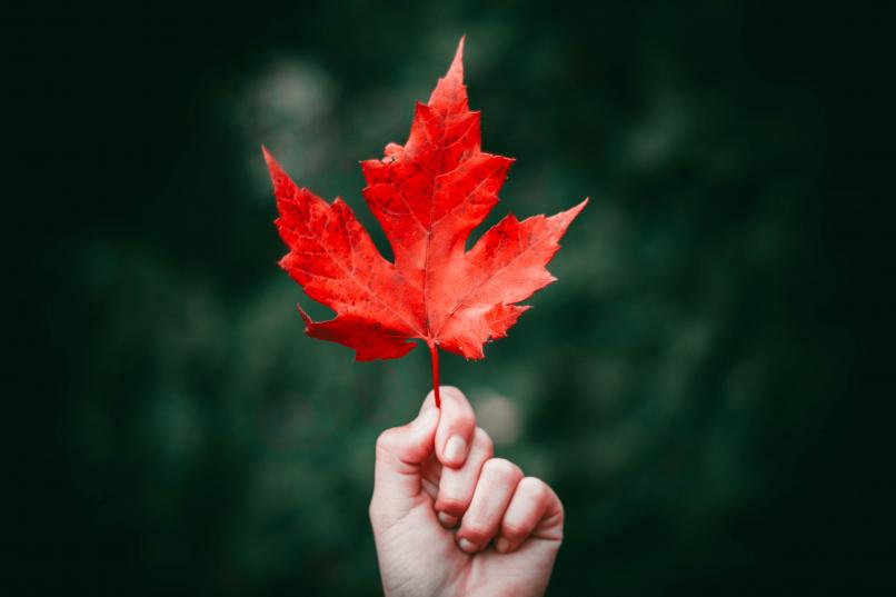 Hand holding up red maple leaf